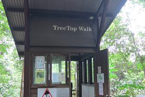 treetop-walk-2